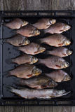 Frische Flussfische Stockfotografie