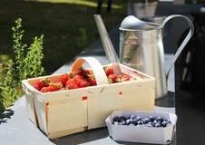 Frische Früchte im Sommergarten Stockbild