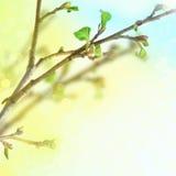 Frische Frühlingsblätter Stockfoto