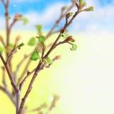 Frische Frühlingsblätter lizenzfreie stockfotografie