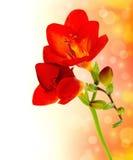 Frische Frühlingsblumen lizenzfreie stockfotografie