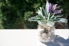 Frische Frühlingsduftpflanzen, -lavendel und -salbei im Glasgefäß mit Kieseln stockbild