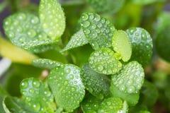 Frische Frühlingsgrünblätter stockbild