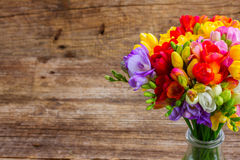 Frische Freesieblumen Stockfoto