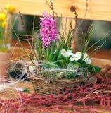 Frische Frühling Hyazinthe Stockbilder