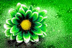 Frische Frühlings-Blume umweltfreundlich Lizenzfreie Stockfotografie