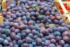 Frische Frucht von den Pflaumen verkauft am Markt in Deutschland stockfotografie