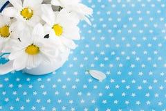 Frische Gänseblümchenblumen auf Hintergrund der blauen Sterne Stockbild