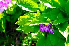 Frische Gartenblumen Lizenzfreies Stockbild