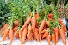 Frische Gartenkarotten. Stockfoto