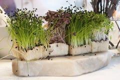 Frische Gartenkresse der Zusammenstellung Lizenzfreies Stockbild