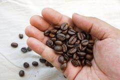 Frische gebratene Kaffeebohnen in der Hand stockfoto