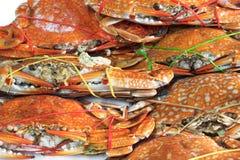 Frische gedämpfte Krabbe Lizenzfreie Stockfotos