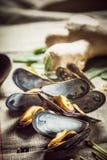 Frische gekochte Miesmuscheln für ein Meeresfrüchteabendessen Lizenzfreies Stockbild