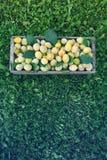 Frische gelbe Pflaumen Reife Fr?chte in einer Holzkiste auf Gras stockfotografie