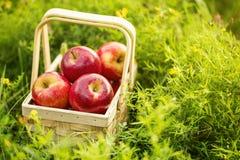 Frische geschmackvolle rote Äpfel im hölzernen Korb auf grünem Gras Lizenzfreies Stockfoto