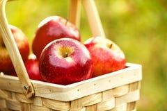 Frische geschmackvolle rote Äpfel im hölzernen Korb auf grünem Gras Lizenzfreie Stockfotos