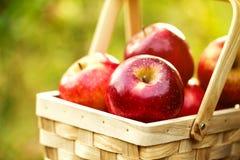 Frische geschmackvolle rote Äpfel im hölzernen Korb auf grünem Gras Stockfotos