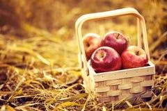 Frische geschmackvolle rote Äpfel im hölzernen Korb auf rotem Autumn Background Stockfoto