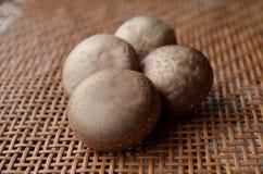 Frische gesunde braune Pilze Stockfoto