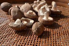 Frische gesunde braune Pilze Stockbild