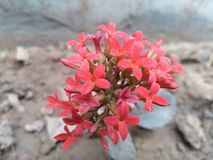 Frische glühende Blume Stockfoto