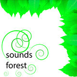 Frische Grünblätter Stockbild