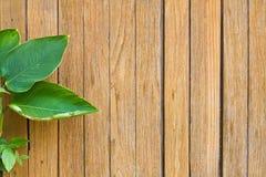 Frische Grünblätter auf dem Bretterbodenhintergrund Stockfotografie