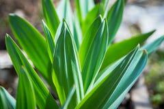 Frische Grünblätter im Garten Lizenzfreie Stockfotos