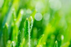 Frische Grünblätter im Garten Stockfotos