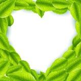 Frische Grünblätter mit geformtem Rahmen des Herzens Stockbilder