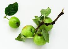 Frische grüne Äpfel, Draufsicht stockbild