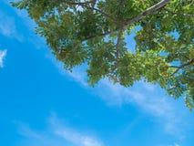 Frische grüne Bäume und weiße flaumige Wolken im blauer Himmel daylig lizenzfreies stockbild