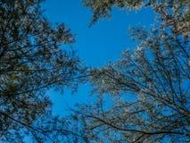 Frische grüne Bäume und weiße flaumige Wolken im blauer Himmel daylig stockfoto