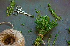 Frische grüne Bank des Gartenthymians am dunklen Hintergrund lizenzfreie stockfotos