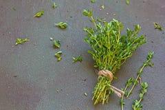 Frische grüne Bank des Gartenthymians am dunklen Hintergrund stockfotografie