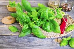 Frische grüne Basilikumblätter Lizenzfreie Stockfotos