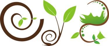 Frische grüne Blätter von Anlagen lizenzfreie stockfotos