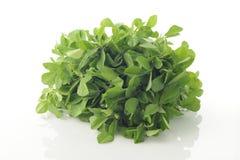 Frische grüne Bockshornklee-Blätter Stockfotos