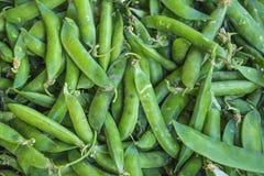 Frische grüne Bohnen auf weißem Hintergrund Lizenzfreies Stockfoto