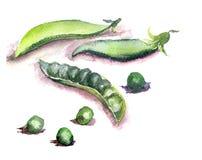 Frische grüne Erbsen Stockfotografie