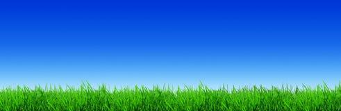 Frische grüne Grashalme belichtet durch die Sonne stockbild
