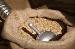 Frische grüne Kaffeebohnen stockfotos
