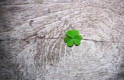 Frische grüne Kleeblätter über hölzernem Hintergrund,  Stockfoto