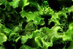 Frische grüne Kopfsalatblätter Stockfotos