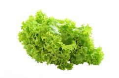 Frische grüne Kopfsalatblätter getrennt auf Weiß lizenzfreies stockbild