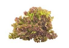 Frische grüne Kopfsalatblätter getrennt auf Weiß Lizenzfreie Stockbilder