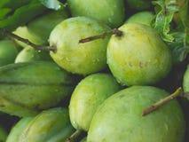 Frische grüne Mangofrüchte Lizenzfreie Stockfotos