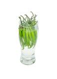 Frische grüne Paprikas in einem Glas voll vom Wasser Stockfoto