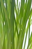 Frische grüne Schnittlauche stockfotos